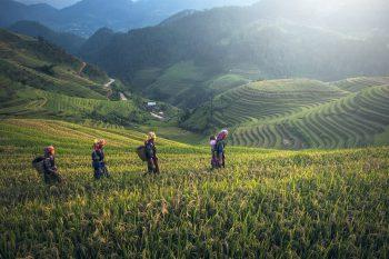 Agriculture & Rural Development_Asia